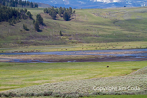 Photo of a portion of the Lamar Valley.