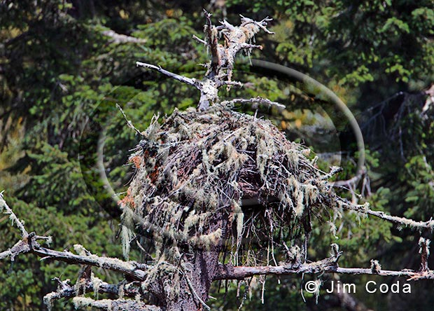 Photo of an osprey nest in Point Reyes National Seashore