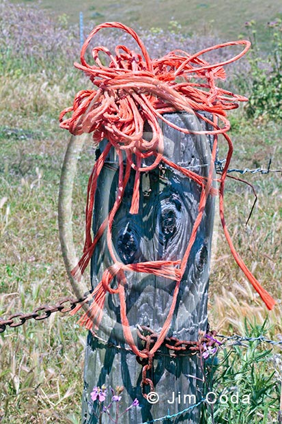 Photo of some discarded baling twine which is dangerous to wildlife.