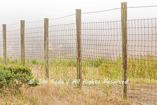 Photo of the elk containment fence at Tomales Point.